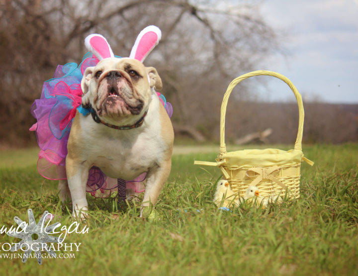 Easter 2015 | Dog Photo Session | McKinney, TX