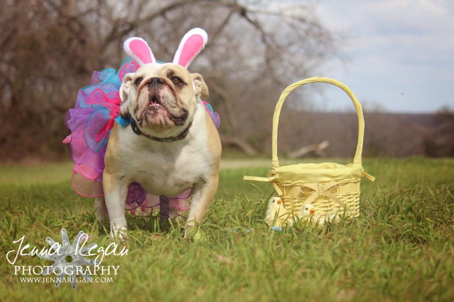 Easter 2015 | Dog Photo Session | McKinney, TX