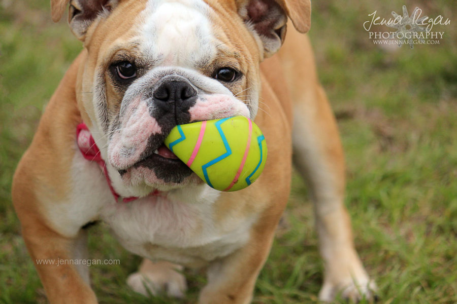 Pastel Paws | Easter Dog Photo Sessions, McKinney TX
