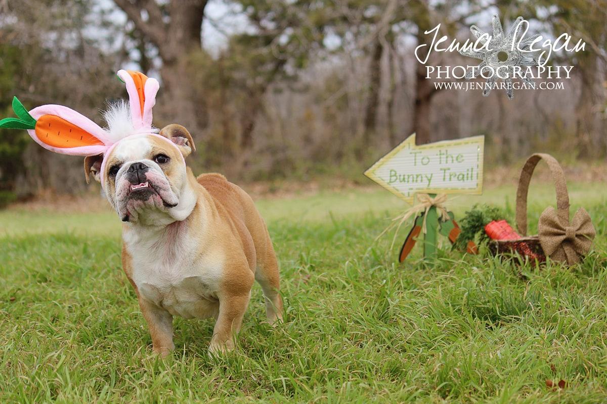 holiday-dog-photography-north-texas