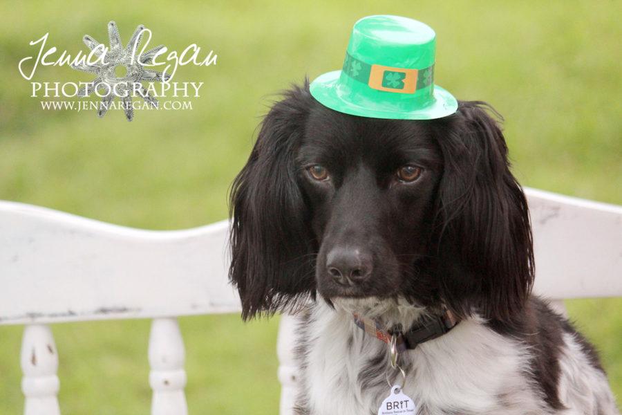 Dog Photography at the North Texas Irish Festival | Dallas Texas