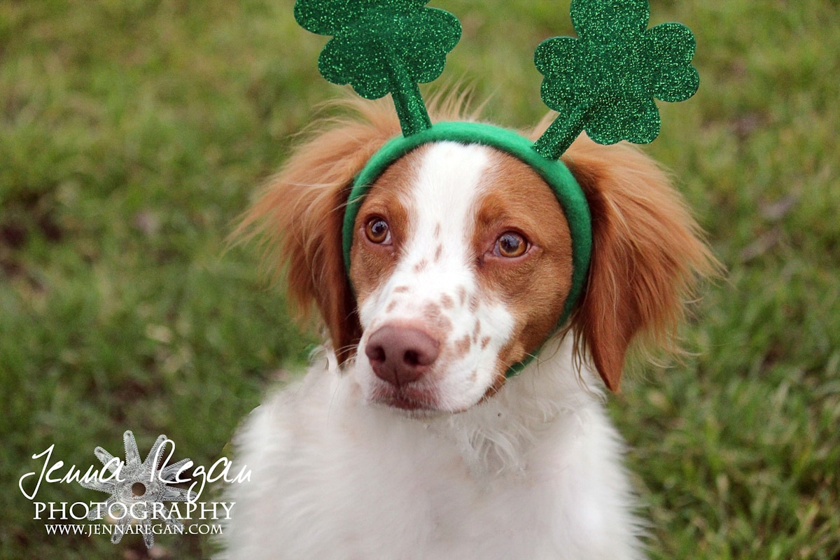 irish-pet-photography-mckinney