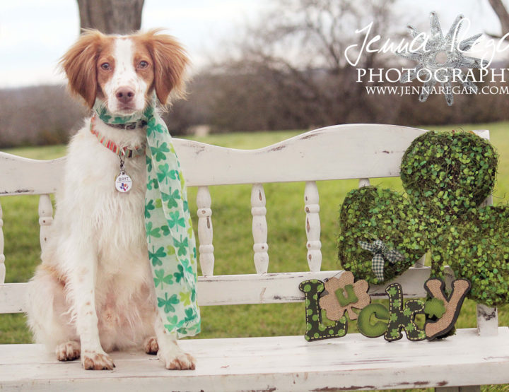 St. Patrick's Day Pet Photography | McKinney, TX