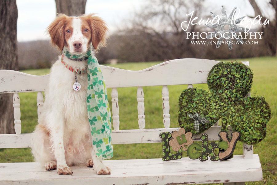 St. Patrick's Day Pet Photography | McKinney, TX