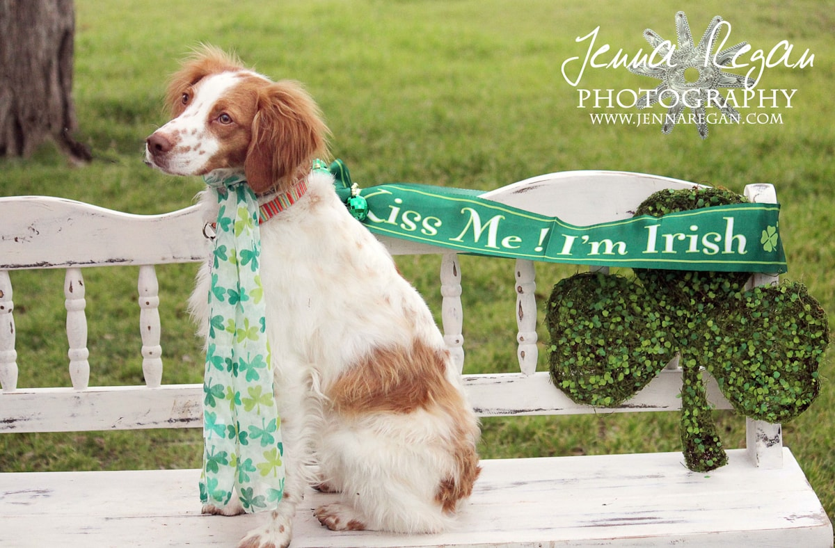 st-patricks-day-pet-photography-mckinney