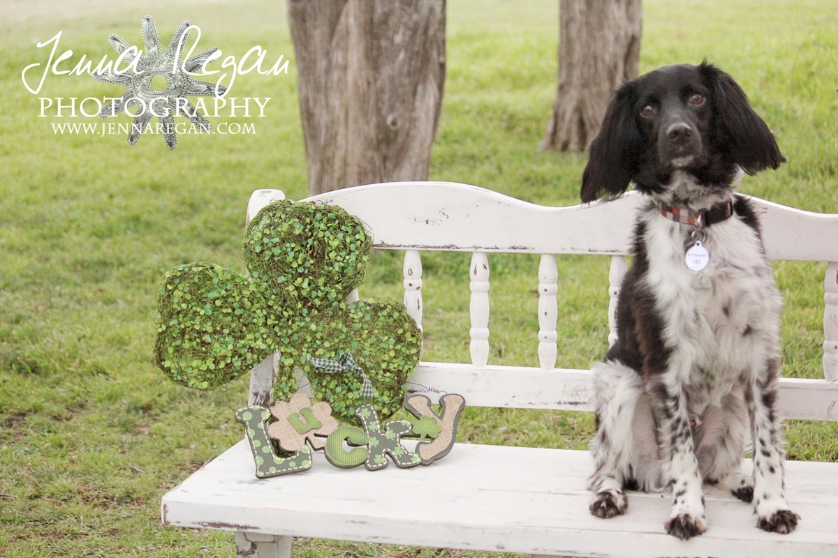 st-patricks-day-photo-shoot-for-dogs