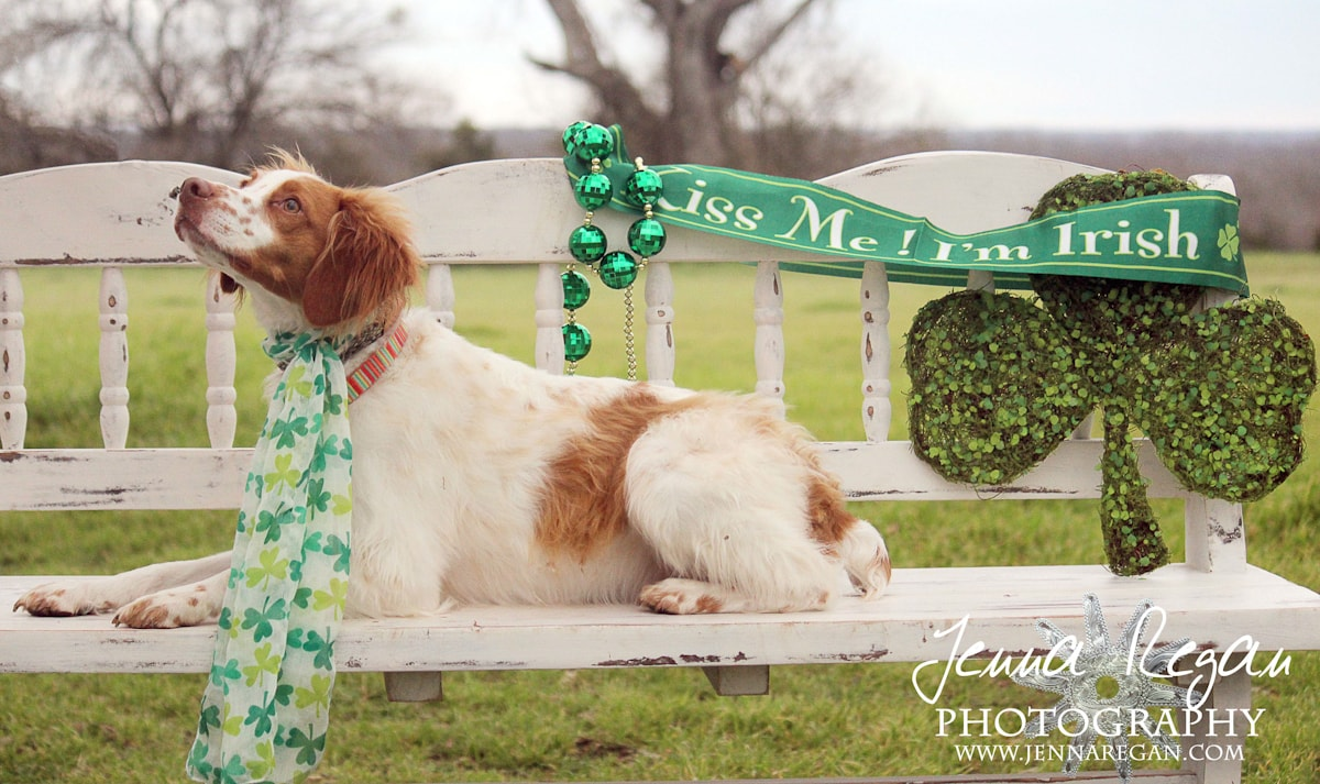 st-patricks-dog-photos-dallas