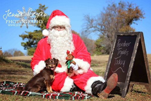 chrismas-pet-photos-dallas