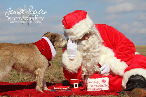 christmas santa paws photos dallas
