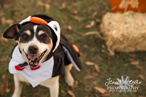 DFW Dog Halloween Photo Sessions | McKinney TX
