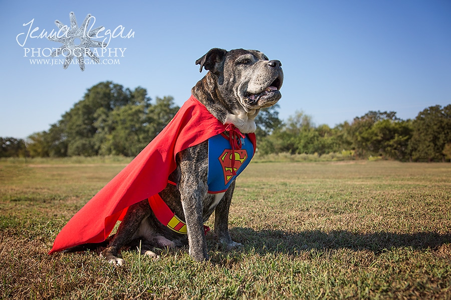dfw-pet-photography-halloween