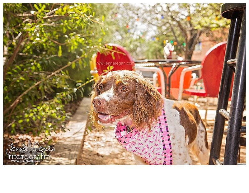 jenna-regan-photography-brittany-rescue-in-texas-foster-dog1