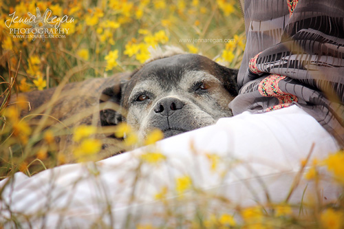 Senior Dog Photo Session | North Texas