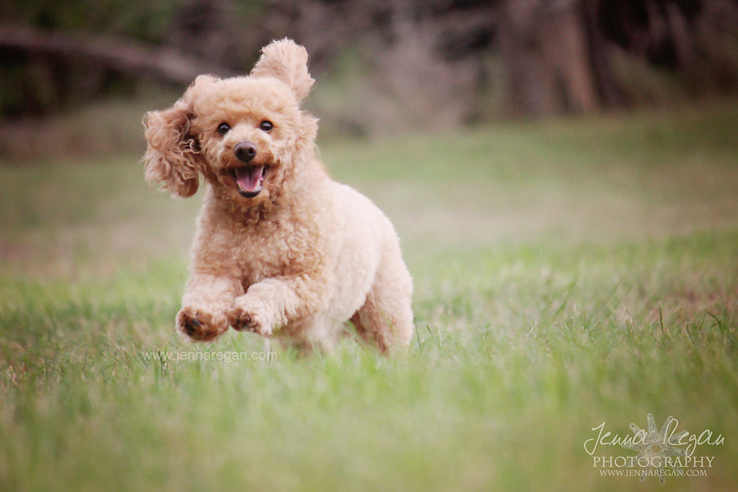 action shots dfw dog photography texas