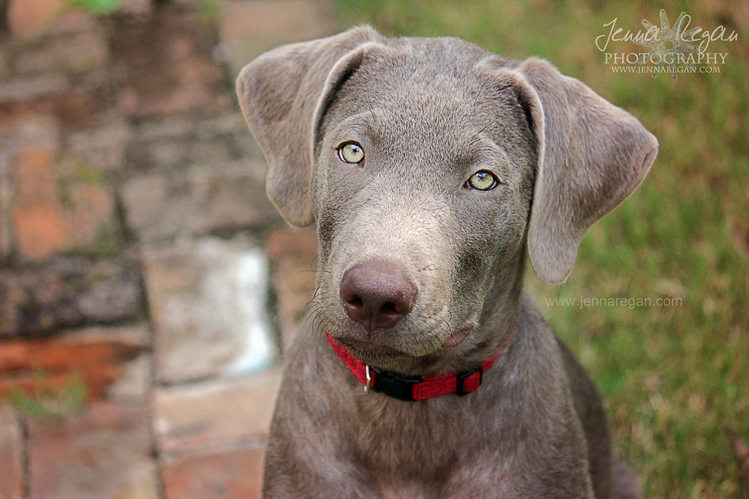 bonham-texas-pet-photographer