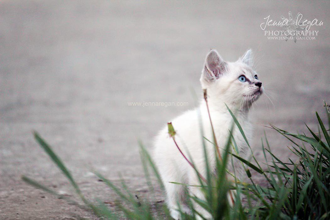 dallas cat photographer