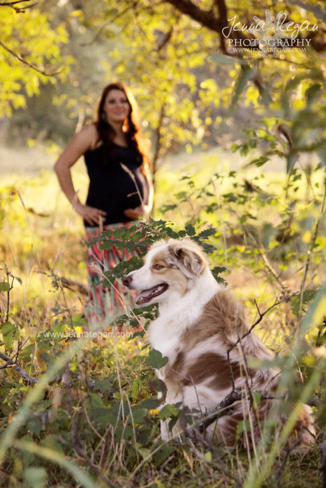 dallas maternity photos with dog