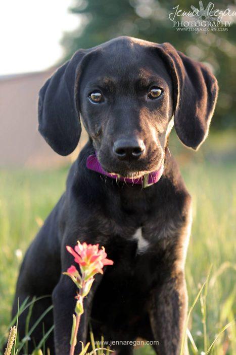 dallas puppy photographer