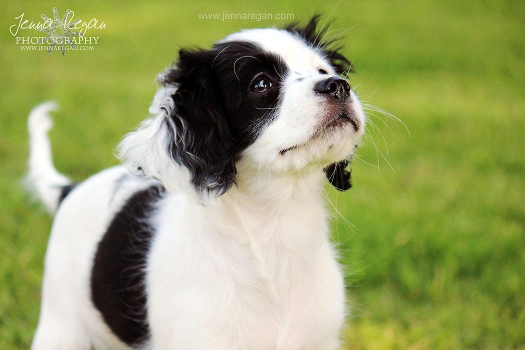 fort worh puppy photographer