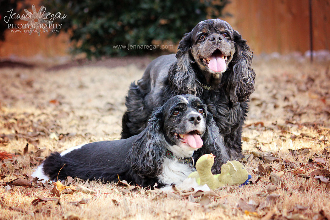 frisco texas dog photographer