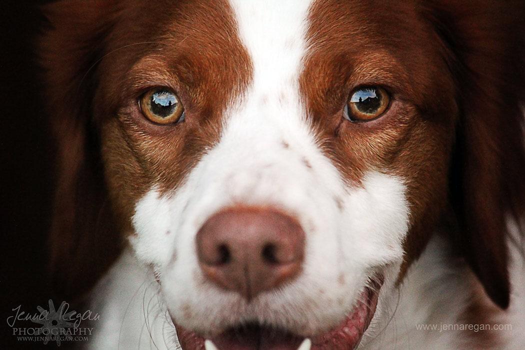 great pet photographer dallas texas