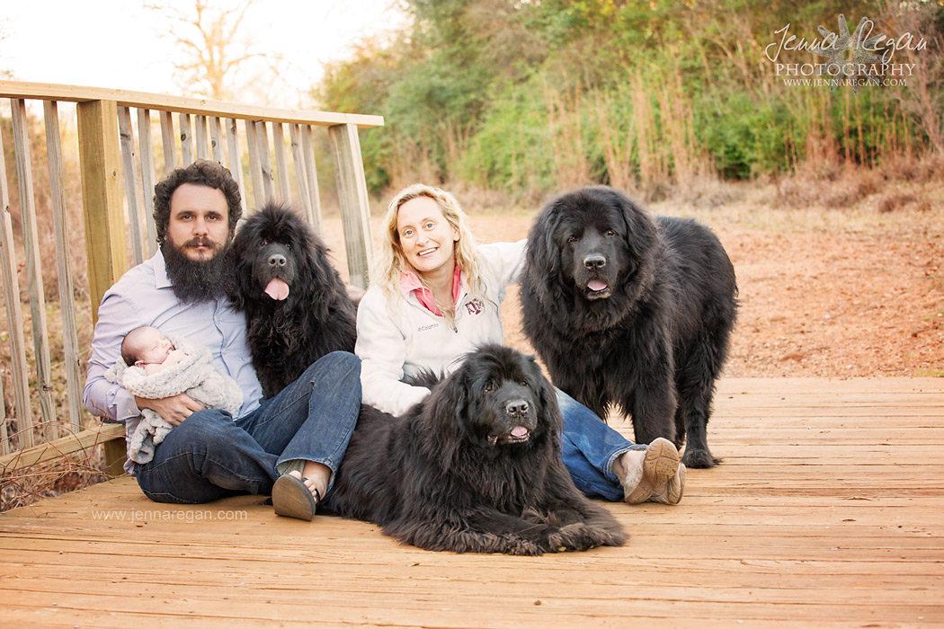 multiple dog photo shoot north texas