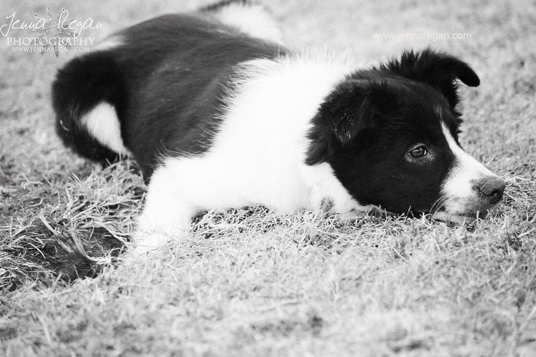 puppy-package-pet-photographer-mckinney-texas