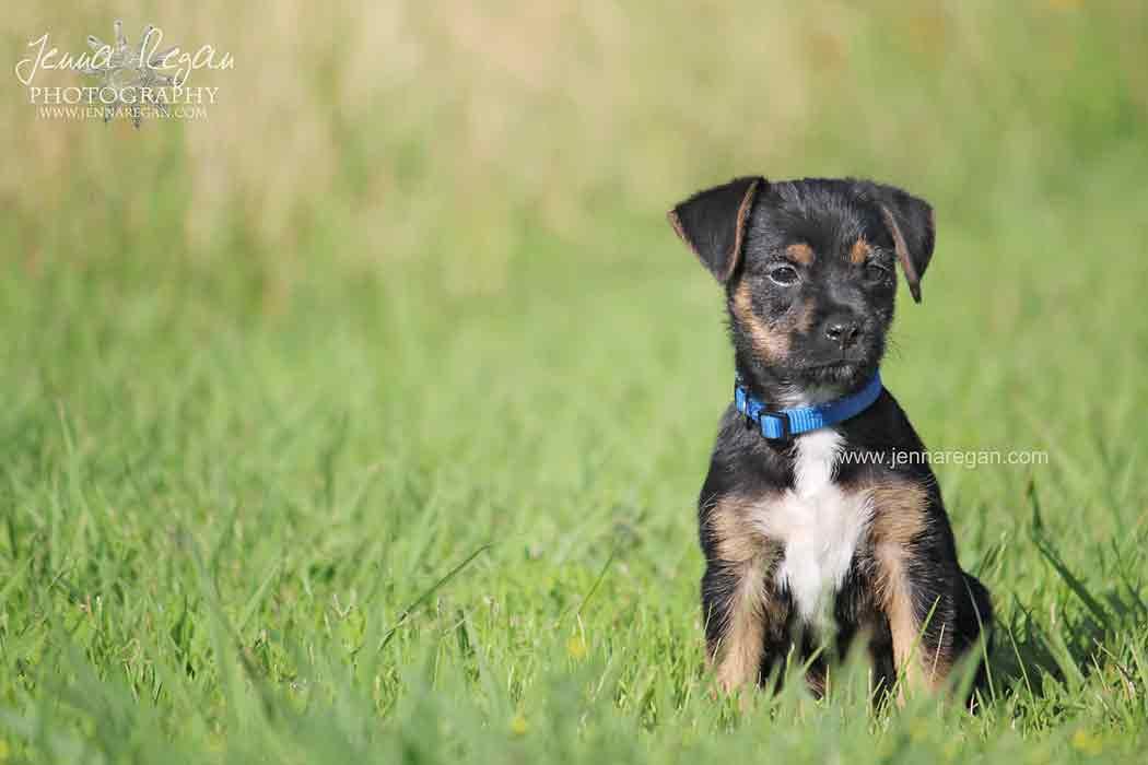 puppy photo shoot dallas texas