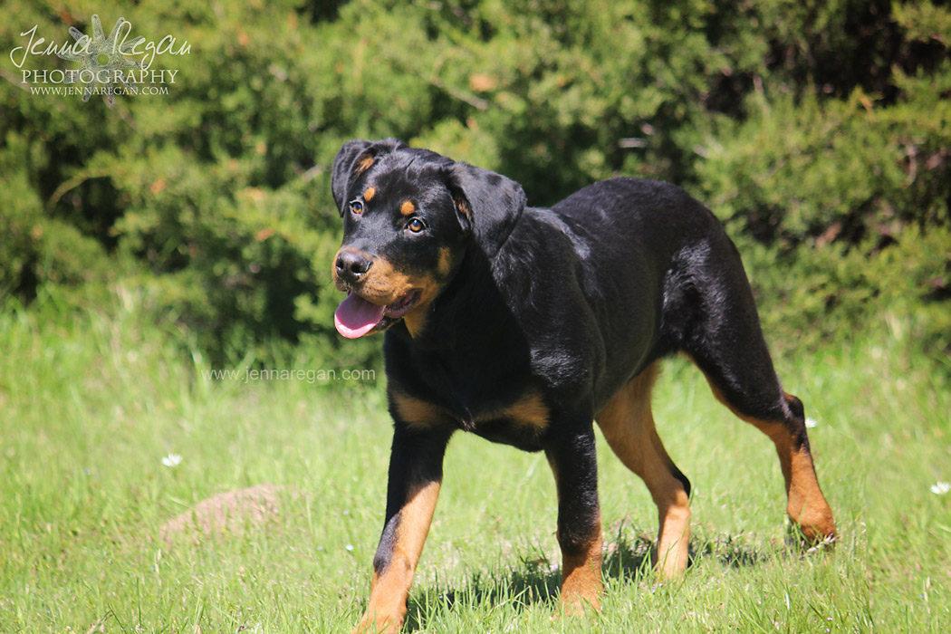 puppy-photo-shoot-mckinney-texas