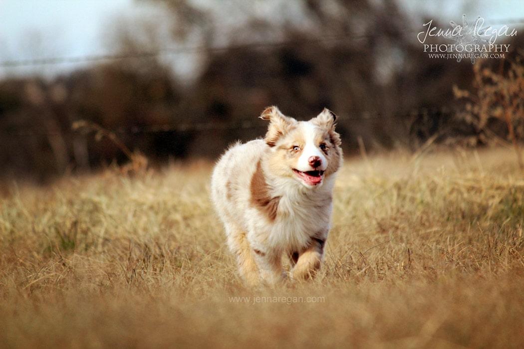 puppy-portraits-sherman-texas