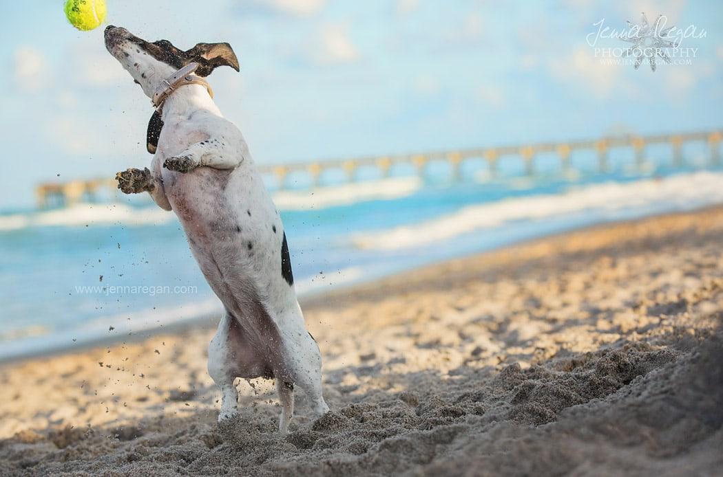south florida pet photographer