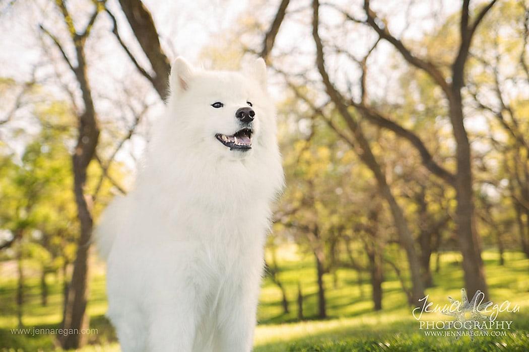 spring dog photo shoot dallas texas