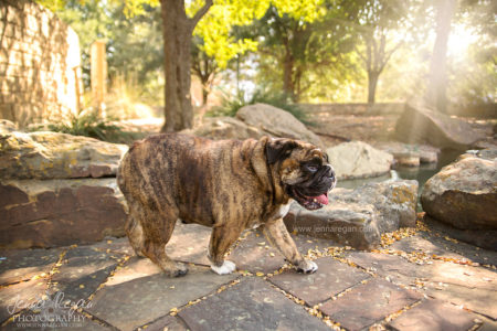 who is the best pet photographer in dallas