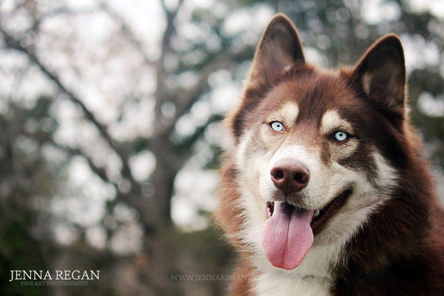 Dog Model Database   Dallas and Fort Worth Dogs Needed   Jenna Regan