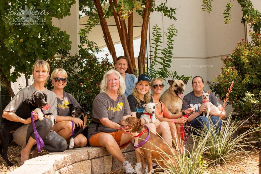 Dallas Dog Adoption Event | MISI | July 2017