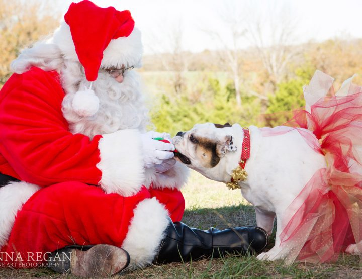 Paws and Claus Pet Portrait Experience | Holiday Pet Photos with Santa | 2017