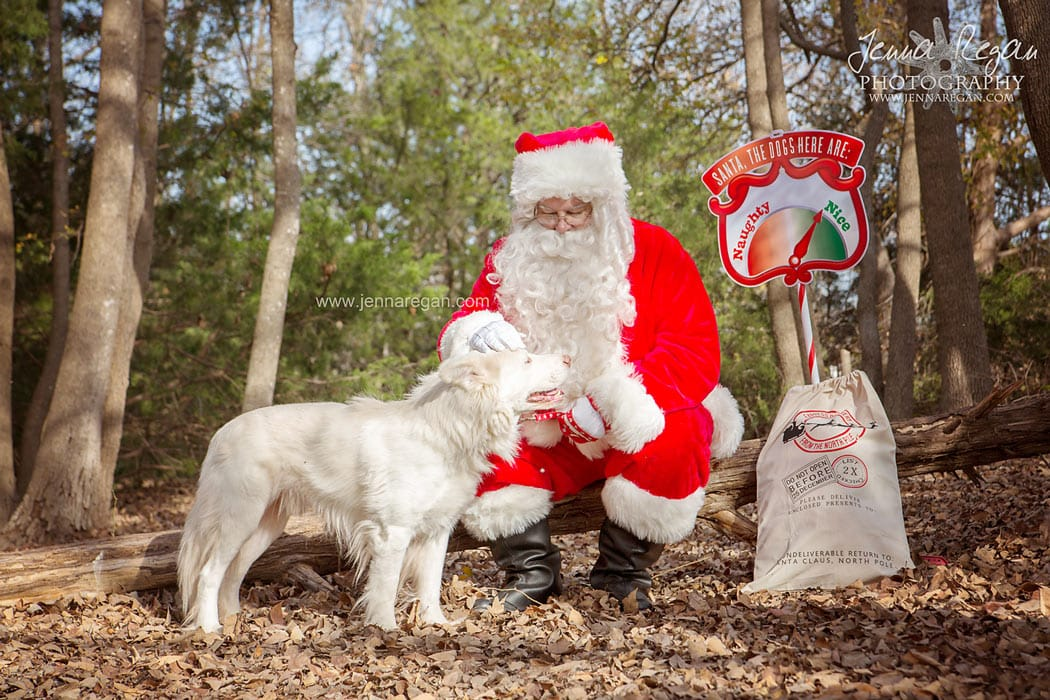 santa paws dallas