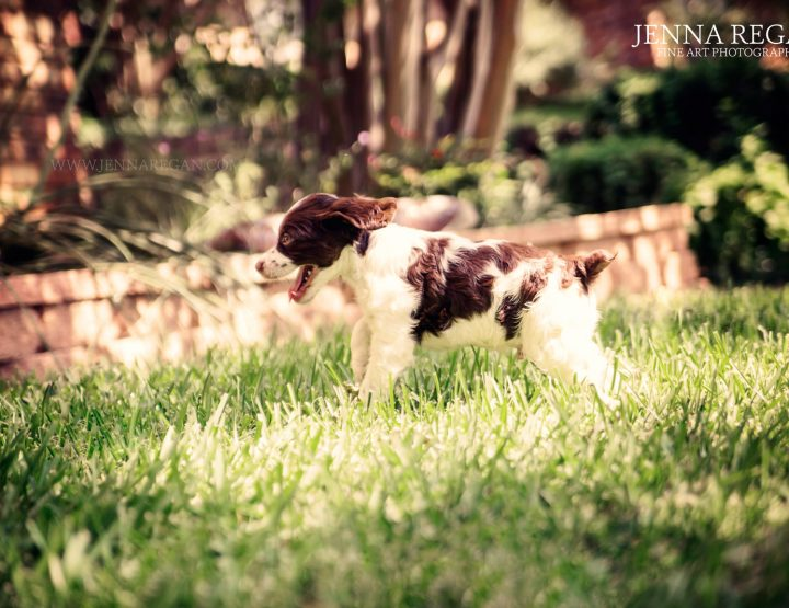 Happy National Puppy Day! | Behind the Scenes of a Puppy Photo Session | Arlington, TX