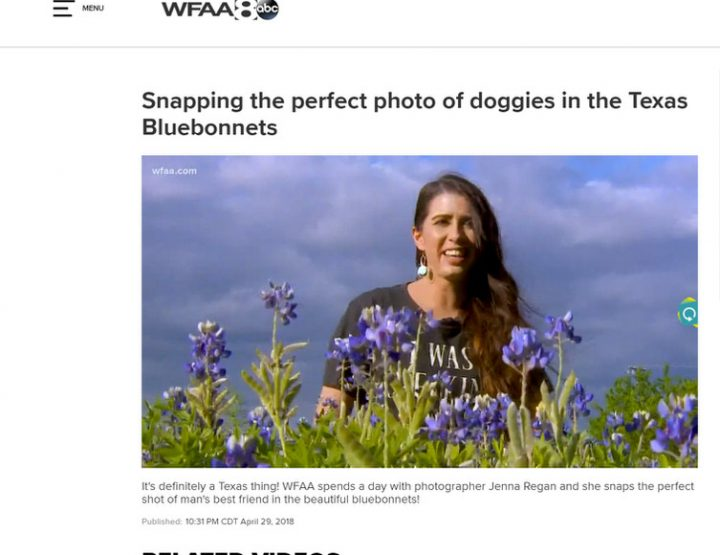 News Feature: Dallas' WFAA Channel 8 | Jenna Regan Photographing Dogs in Bluebonnets