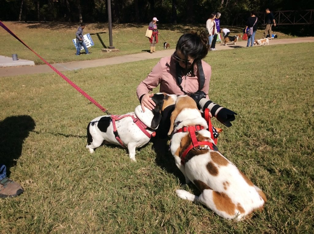 candid photo of pet photographer with basset hound dog clients