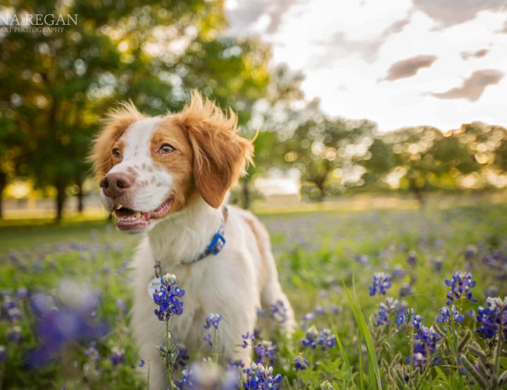 Dog Photography
