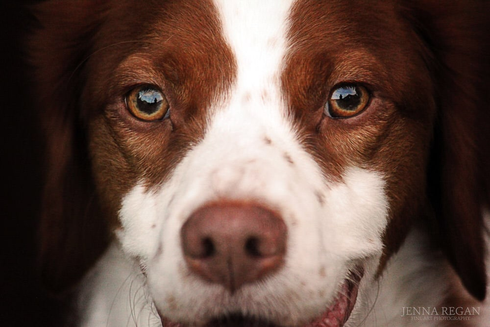 close up photo of dogs eyes and nose