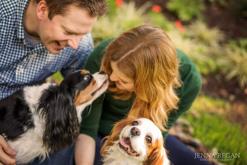 family photos with multiple cavalier king charles spaniels dog