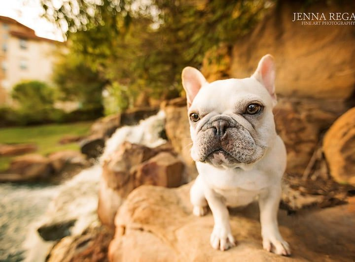 We've Launched Pet Model of the Month | With DFW Pet Photographer Jenna Regan