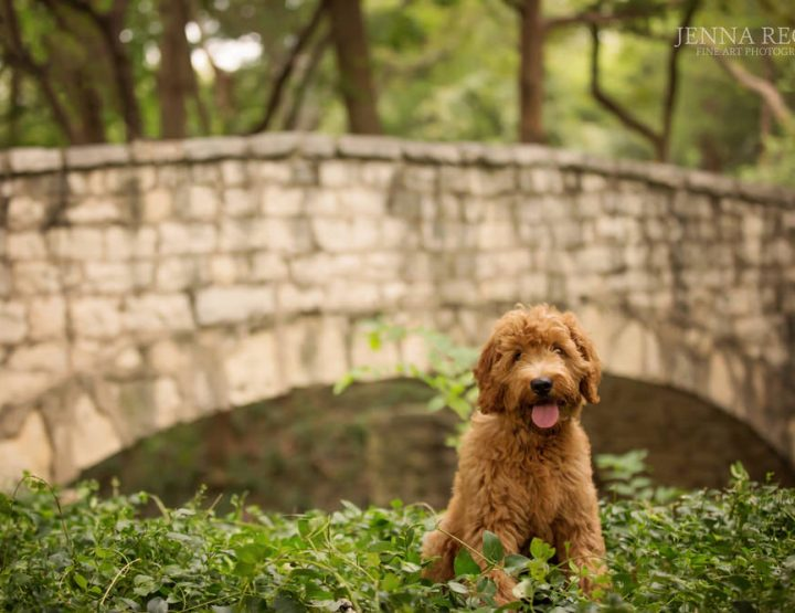 How to Prepare Your Dog for a Photography Session | Tips from a Dallas Dog Photographer
