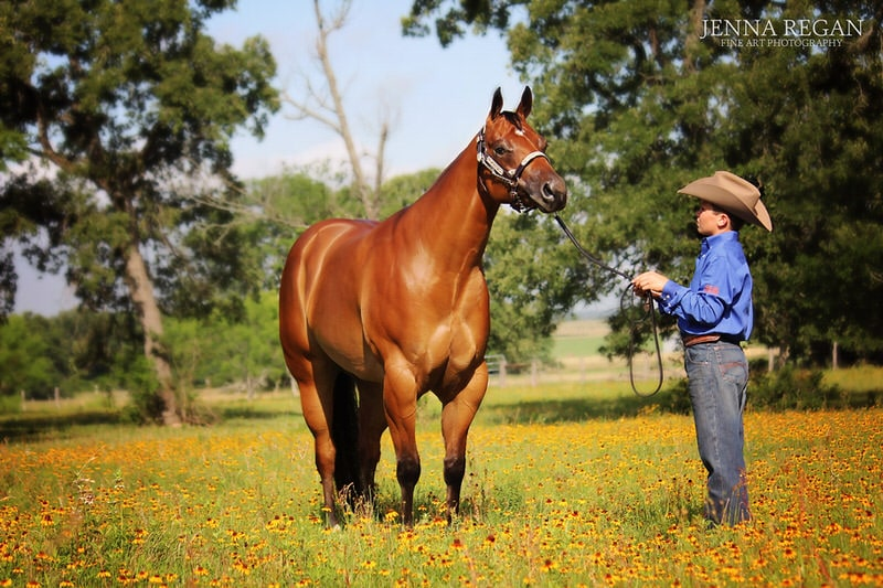 halter horse show horse photo shoot- dfw equine photgrapher- jenna regan