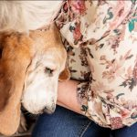 older woman with senior basset hound dog- carrollton texas dog photo shoot