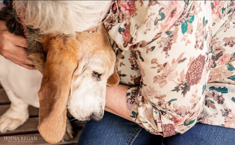 Senior Dog Bucket List | Top 11 Ideas for Fun in Dallas From Jenna Regan Photography