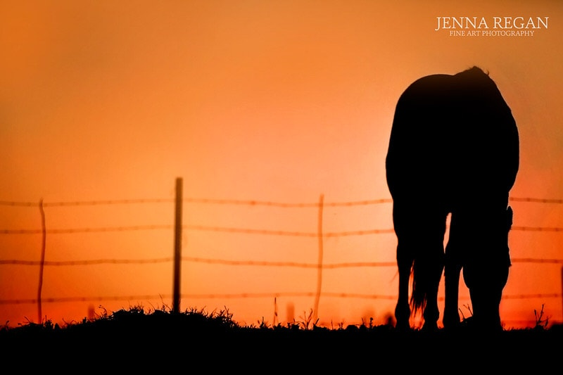 quarter horse in orange sunset in texas- north texas photographed by equine photographer Jenna Regan