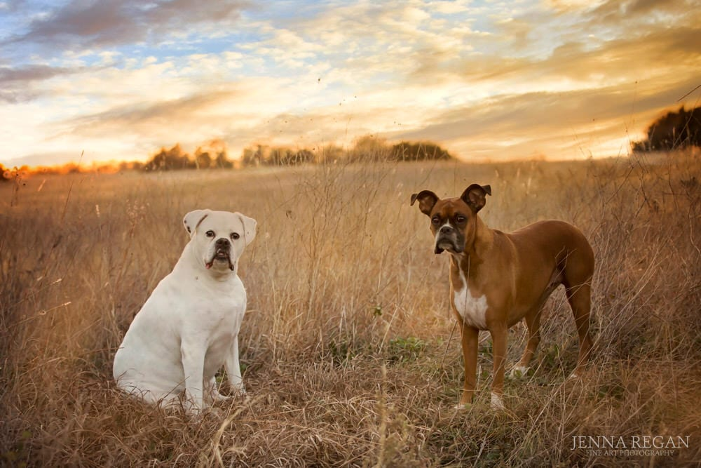 two dogs in sunset at park